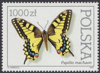Motyle z kolekcji Instytutu Zoologii PAN w Warszawie - 3195
