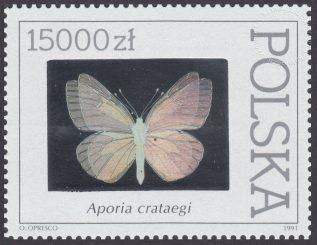 Motyle z kolekcji Instytutu Zoologii PAN w Warszawie - 3201