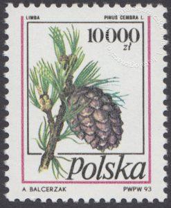 Owoce drzew iglastych - 3308