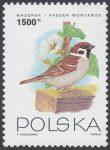 Ptaki ogrodów - 3310