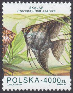 Ryby akwariowe - 3358