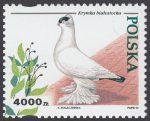 Gołębie hodowlane - 3364