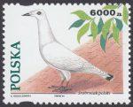 Gołębie hodowlane - 3365