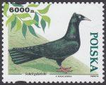 Gołębie hodowlane - 3366