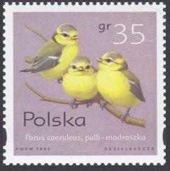 Pisklęta ptaków śpiewających - 3419