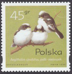 Pisklęta ptaków śpiewających - 3420