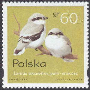 Pisklęta ptaków śpiewających - 3421