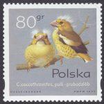Pisklęta ptaków śpiewających - 3422