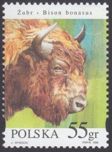Zwierzęta pod ochroną - żubry - 3481