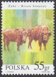 Zwierzęta pod ochroną - żubry - 3483