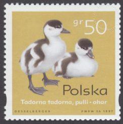Pisklęta zagniazdowniki - 3538