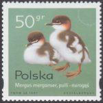 Pisklęta zagniazdowniki - 3539