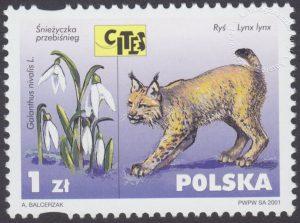 Dzikie zwierzęta i rośliny - gatunki zagrożone wyginięciem - 3746