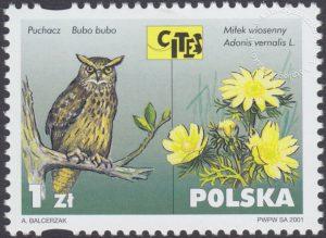 Dzikie zwierzęta i rośliny - gatunki zagrożone wyginięciem - 3748