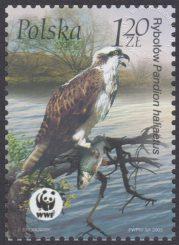 Ptaki - 3929