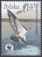 Ptaki - 3931