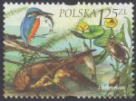 Fauna i flora akwenów słodkowodnych - 3952