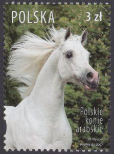 Polskie konie arabskie - 4174
