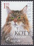 Koty - 4320