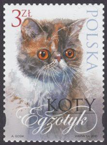 Koty - 4322