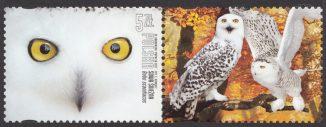 Polskie ptaki - 4812