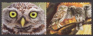 Polskie ptaki - 4813