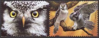 Polskie ptaki - 4814