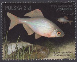 Ryby zagrożone wyginięciem - znaczek nr 4711