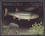 Ryby zagrożone wyginięciem - znaczek nr 4713