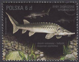 Ryby zagrożone wyginięciem - znaczek nr 4714