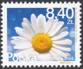 Kwiaty i owoce - 5054