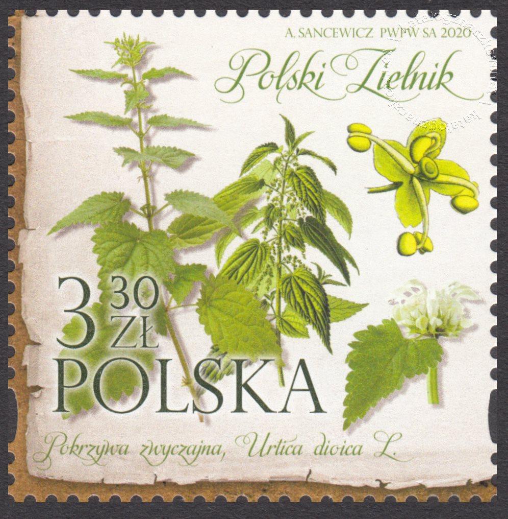 Polski Zielnik znaczek nr 5085