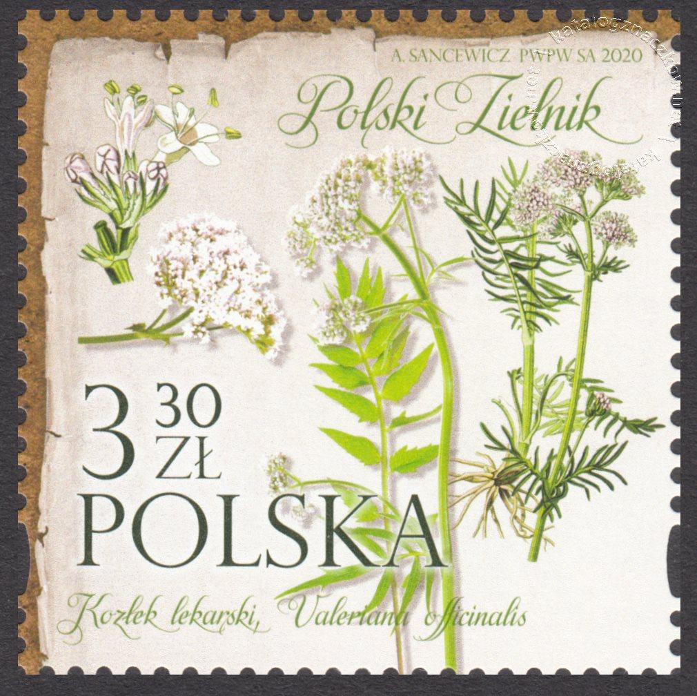 Polski Zielnik znaczek nr 5087