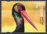 Polskie ptaki - 5113