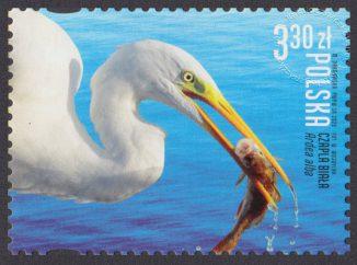 Polskie ptaki - 5114